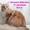 Мейн-кун котята из питомника #1050999