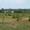 Земельный участок  собств.  в пос.Куликово,   Зеленоградский р-н,  15 ИЖД  #1117528