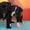 Продаются щенки стаффордширского бультерьера #1136591