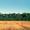 Семена сои,  сорт Припять,  продажа от оригинатора,  Э и СЭ. Высокий белок 38-47% #1226116