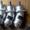 310.112.03 (А1-112/25.03М) гидронасос шлиц.правого вращения #1372189