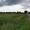 п. Южный -1, Багратионовский район, 9 соток, в собствен., свет, газ, 12км до г.  - Изображение #5, Объявление #1658071