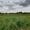 п. Южный -1, Багратионовский район, 9 соток, в собствен., свет, газ, 12км до г.  - Изображение #7, Объявление #1658071
