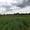 п. Южный -1, Багратионовский район, 9 соток, в собствен., свет, газ, 12км до г.  - Изображение #8, Объявление #1658071