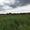 п. Южный -1, Багратионовский район, 9 соток, в собствен., свет, газ, 12км до г.  - Изображение #9, Объявление #1658071