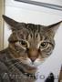 Ищу надёжного хозяина для кота