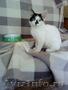 Кошка ищет свой дом