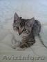 Котенок бесплатно, Объявление #1274843